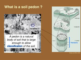 What is a soil pedon ?