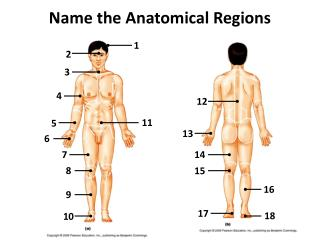 Name the  A natomical Regions