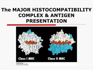 The MAJOR HISTOCOMPATIBILITY COMPLEX & ANTIGEN PRESENTATION