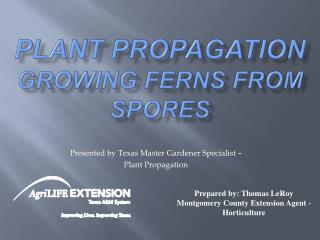Plant Propagation Growing Ferns from Spores