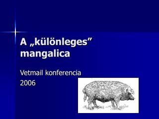 """A """"különleges"""" mangalica"""