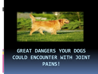 Great Dangers Your Dogs Could Encounter With Joint!