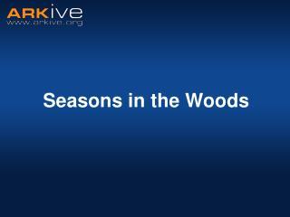 Seasons in the Woods