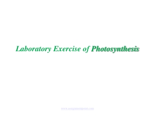 Exercise 6: