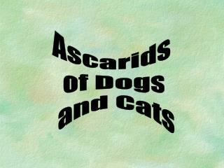 Ascarids  of Dogs  and Cats