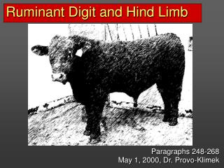 Ruminant Digit and Hind Limb