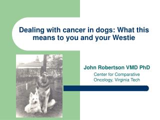 Dealing with cancer in dogs: What this means to you and your Westie