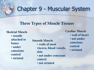 Chapter 9 - Muscular System