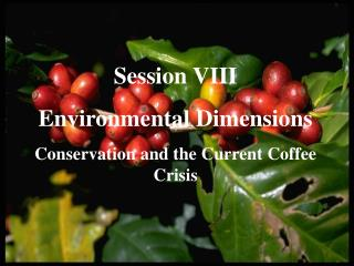 Session VIII Environmental Dimensions Conservation and the Current Coffee Crisis