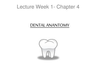 Lecture Week 1- Chapter 4