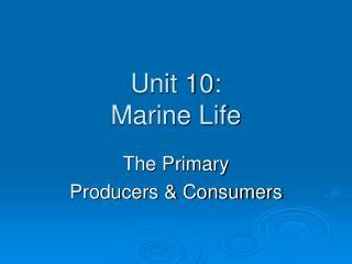 Unit 10: Marine Life