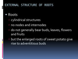 EXTERNAL STRUCTURE OF ROOTS