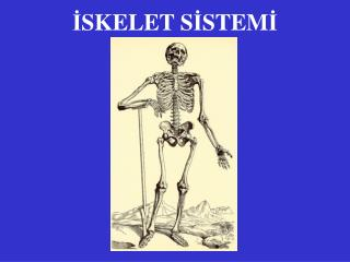 Bölüm 9 kas-i̇skelet sistemi hastalıkları ppt video online indir.