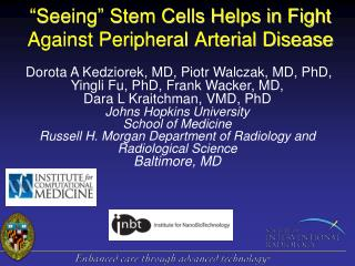 """Seeing"" Stem Cells Helps in Fight Against Peripheral Arterial Disease"