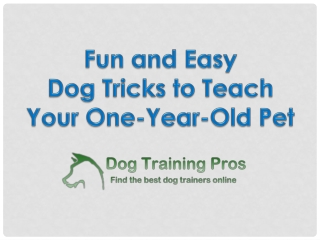 Fun and Easy Dog Tricks to Teach Your One-Year-Old Pet