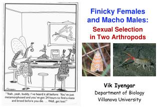 Finicky Females and Macho Males: Sexual Selection in Two Arthropods