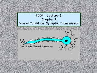 2009 - Lecture 6 Chapter 4 Neural Condition: Synaptic Transmission