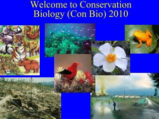 Welcome to Conservation Biology (Con Bio) 2010