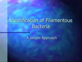 Identification of Filamentous Bacteria