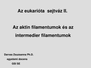 Az eukarióta sejtváz II. Az aktin filamentumok és az intermedier filamentumok