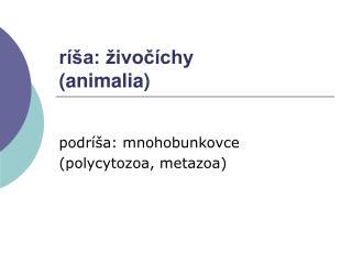 ríša: živočíchy (animalia)