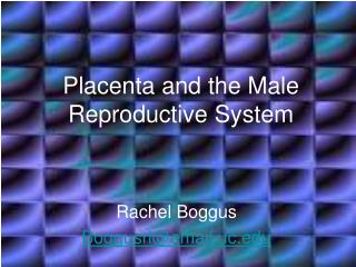 Placenta and the Male Reproductive System