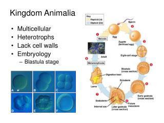 Kingdom Animalia