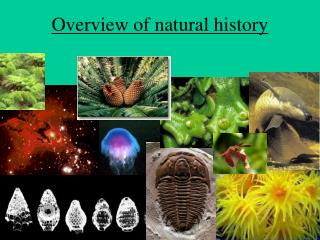 Overview of natural history