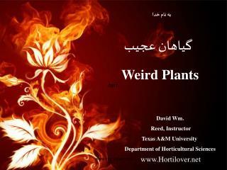 گیاهان عجیب