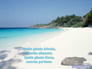 Quién planta árboles, cosecha alimento. Quién planta flores, cosecha perfume.