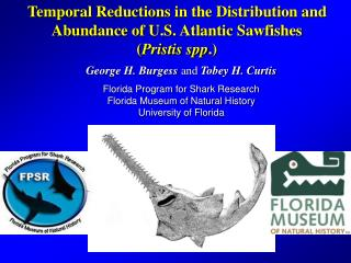 Temporal Reductions in the Distribution and Abundance of U.S. Atlantic Sawfishes   ( Pristis spp .)