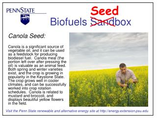 Canola Seed:  Canola is a significant source of vegetable oil, and it can be used as a feedstock for producing biodiesel