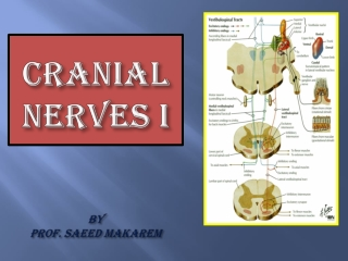 Cranial Nerves I By Prof. Saeed Makarem