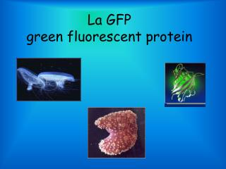La GFP green fluorescent protein
