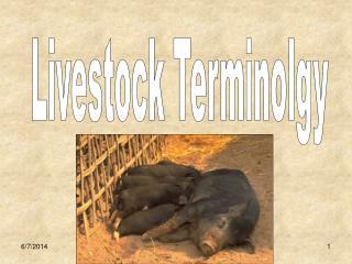 Livestock Terminolgy