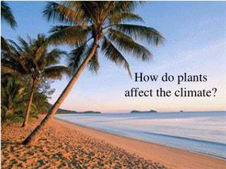 How do plants affect the climate?