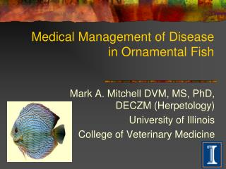 Medical Management of Disease in Ornamental Fish