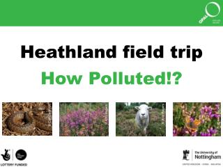 Heathland field trip How Polluted!?