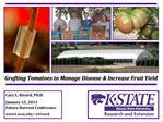 Grafting Tomatoes to Manage Disease Increase Fruit Yield
