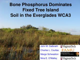 Bone Phosphorus Dominates Fixed Tree Island Soil in the Everglades WCA3