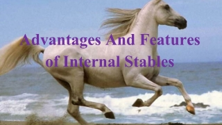 Advantages and features of Horse Internal Stables