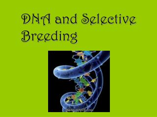 DNA and Selective Breeding