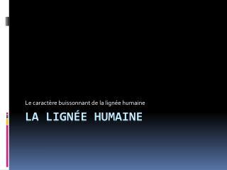 La lignée humaine