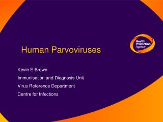 Human Parvoviruses