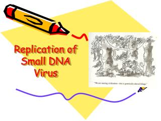 Replication of Small DNA Virus