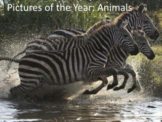 Pictures of the Year: Animals