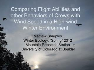 Comparing Flight Abilities and other Behaviors of Crows with Wind Speed in a High-wind Winter Environment