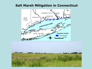 Salt Marsh Mitigation in Connecticut