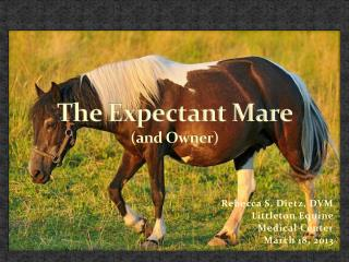 The Expectant Mare  ( and Owner)