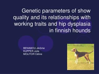 Genetic parameters of show quality and its relationships with working traits and hip dysplasia in finnish hounds
